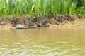 Ho-Chi-Minh-City: Bootsfahrt auf dem Saigon River