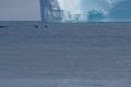 Qeqertarsuaq: Eisberg mit Wal