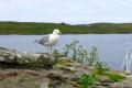 Lerwick, Shetland Inseln