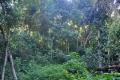 Rio de Janeiro: Stadtregenwald