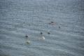 Charleston: Vögel und Delphine