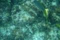Nassau: Unterwasserwelt