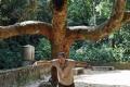 Rio de Janeiro: Tijuca Nationalpark