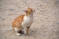 Aqaba: Miau ...