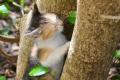 Korfu: Katze am Kloster Paleokastritsa