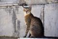 Izmir: Katze in Ephesos