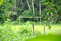 Manaus: Fußball gibts auch im Regenwald