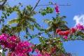 St. Lucia · Morne Coubaril Estate