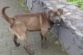 Straßenhunde auf Madeira