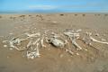 Pferdeskelette in der Namib