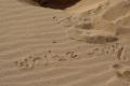 Wüste Namib: White Lady