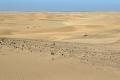 Wüste Namib