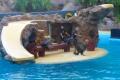 Loro Parque - Seehund-Show
