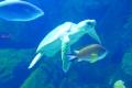 Loro Parque - Aquarium