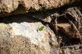 Île Royale: Ameise bei der Arbeit