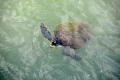 Île Royale: Schildkröte