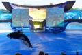 Seaworld: Orca Show