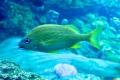 Seaworld: Aquarium