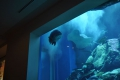 Dubai: Aquarium in der Dubai Mall