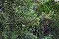 RRio de Janeiro: Tijuca Nationalpark