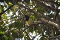 Iguazu: Schwalbe