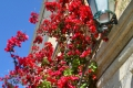Korfu: Blumen am Kloster Paleokastritsa