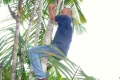 Manaus: Palmensteigen