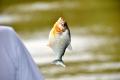 Santarém: Piranha-Angeln