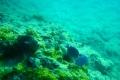 Schnorcheln auf Gustavia