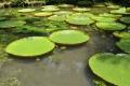Belém: Botanischer Garten
