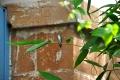 Ile Royale: Kolibri
