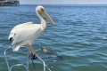"Ausflug ""Big 5 der Meere im Luxuskatamaran"""
