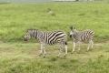 "Ausflug ""Safari im Tala Naturreservat"""