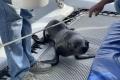 Robbe auf dem Katamaran