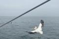Pelikan auf dem Katamaran