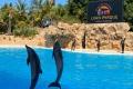 Loro Parque - Delfinshow