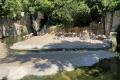 Bioparc Valencia - Flamingos
