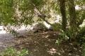 Bioparc Valencia - Schildkröten