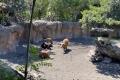 Bioparc Valencia - Büffel