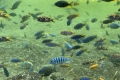 Bioparc Valencia - Flussfische