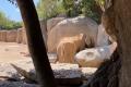 Bioparc Valencia - Elefanten