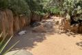 Bioparc Valencia - Antilopen