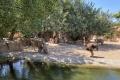 Bioparc Valencia - Nashorn und Strauß